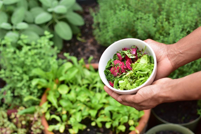 Como fazer uma horta - vegetais folhosos