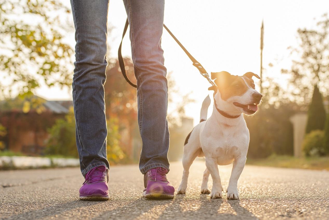Pets em condomínio - cachorro passeando com uma pessoa