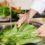 Como higienizar alimentos: dicas para limpeza e conservação corretas