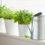 3 ervas aromáticas para cultivar em casa
