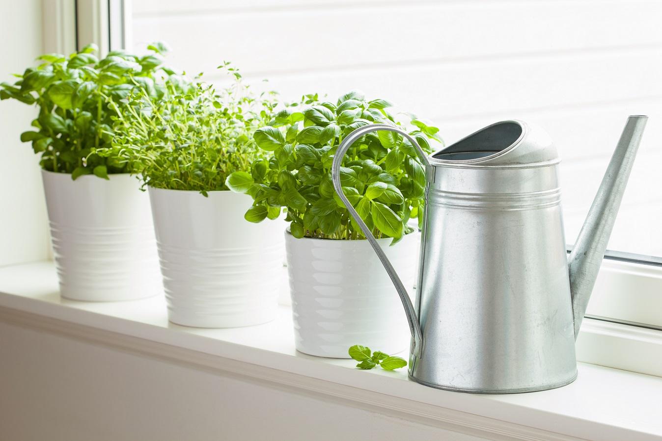 Ervas aromáticas - vasinhos com ervas na cozinha