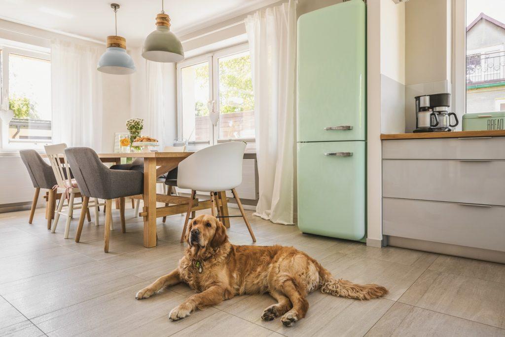Gato ou cachorro - imagem com cachorro na cozinha